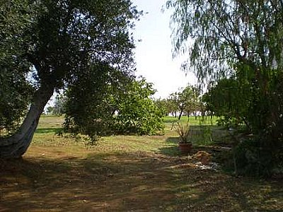 Image 6 | Farmhouse for sale with 13,000m2 of land, Ostuni, Brindisi, Puglia 130728