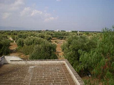 Image 9 | Farmhouse for sale with 13,000m2 of land, Ostuni, Brindisi, Puglia 130728