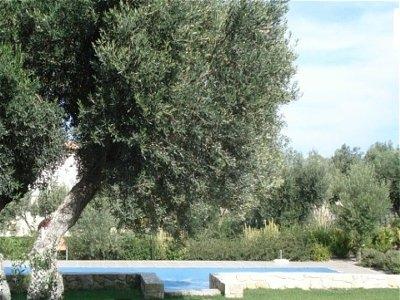 Image 2   Villa For Sale Kassandra 141961
