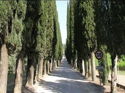 Image 7 | 5 bedroom farmhouse for sale with 1,000m2 of land, Castelnuovo Berardenga, Siena, Chianti 150865
