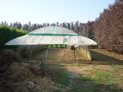 Image 3   Villa for sale with 1.5 hectares of land, Modena, Emilia-Romagna 151456