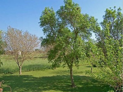 Image 3   7 bedroom farmhouse for sale with 1.5 hectares of land, Alpilles Campagne, Vaucluse , Provence 152786