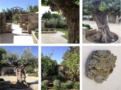 Image 7 | 4 bedroom villa for sale, Saint Tropez, St Tropez, French Riviera 157423