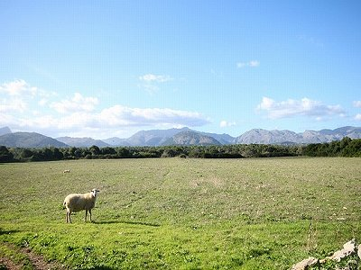 Plot of land for sale, Alcudia, Northern Mallorca, Mallorca