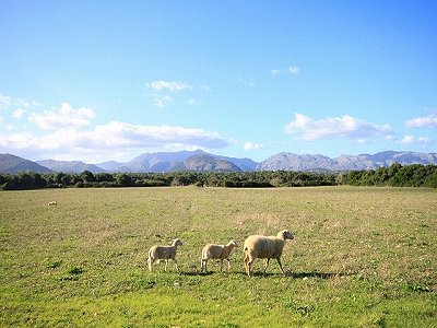 Image 1 | Plot of land for sale, Alcudia, Mallorca 158688