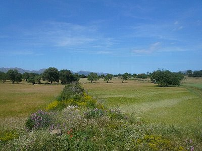 Image 2 | Plot of land for sale, Alcudia, Mallorca 158688