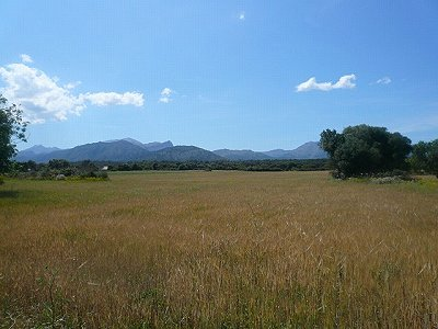 Image 3 | Plot of land for sale, Alcudia, Mallorca 158688