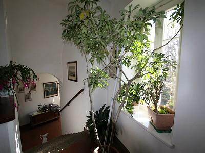 Image 4 | 4 bedroom villa for sale with 0.3 hectares of land, Menaggio, Tremezzina, Como, Lake Como 160016