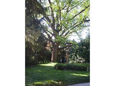Image 5 | 10 bedroom villa for sale with 1 hectares of land, Stuffione di Ravarino, Modena, Emilia-Romagna 163003