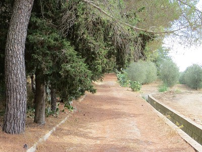 Image 8 | 3 bedroom villa for sale with 3.5 hectares of land, Enna, Sicily 165069