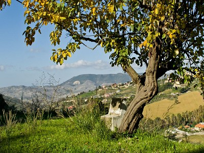 Image 5 | 5 bedroom villa for sale with 5 hectares of land, Caltagirone, Catania, Sicily 167708