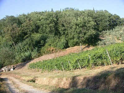 Image 15 | 7 bedroom farmhouse for sale with 3.5 hectares of land, Montespertoli, Florence, Chianti 168323