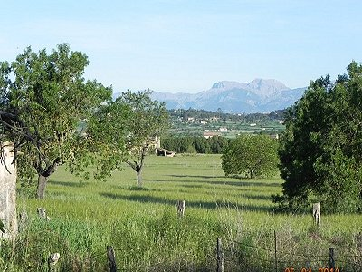 Image 5 | Sineu House For Sale 169519