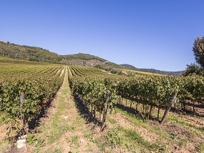 Image 17 | Luxury Castle for Sale with Vineyard in Tuscany 172662