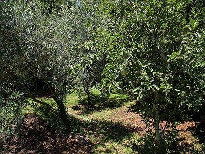 Image 27 | 5 bedroom villa for sale, Florence, Chianti 174210