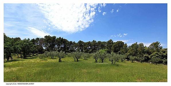 Image 20 | 12 bedroom French chateau for sale with 82 hectares of land, Taradeau, Var , Provence 174324