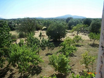 Image 4 | 3 bedroom mill for sale, Arta, Mallorca 177529