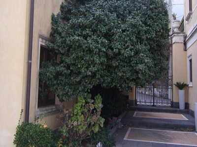 Image 12   5 bedroom villa for sale with 0.33 hectares of land, Mascali, Catania, Sicily 179323