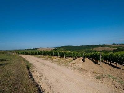 Image 11 | Award Winning Tuscan Vineyard and Wine Estate for sale  180731