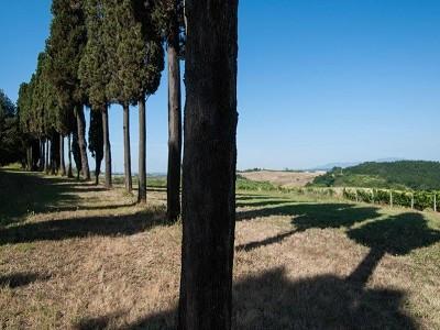 Image 6 | Award Winning Tuscan Vineyard and Wine Estate for sale  180731