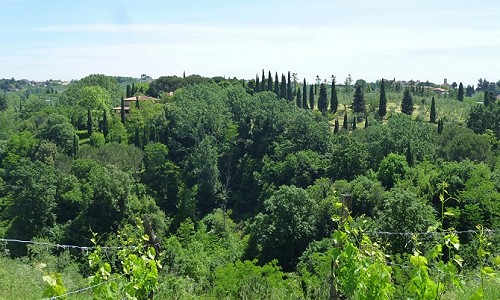 Image 5   4 bedroom farmhouse for sale with 11.5 hectares of land, Palaia, Pisa, Tuscany 183459