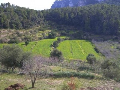 Image 9 | Mallorca villa with Agriturismo business and potential for hotel 184149