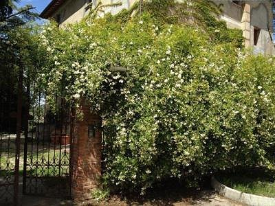 Image 19   3 bedroom farmhouse for sale with 0.22 hectares of land, Magione, Perugia, Umbria 184220