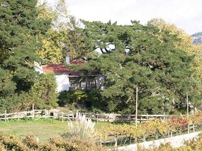 Image 27 | 7 bedroom farmhouse for sale, Alpendorada e Matos, Porto District, Northern Portugal 185195