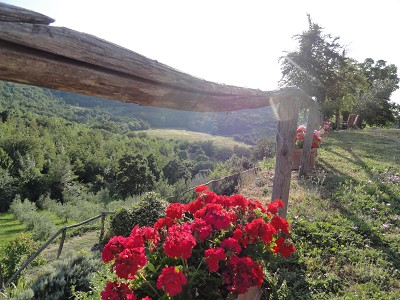 Image 3 | Idyllic Tuscan Farmhouse for Sale near Florence with Income Opportunity  185791