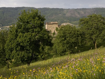 Image 8 | Idyllic Tuscan Farmhouse for Sale near Florence with Income Opportunity  185791