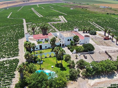 Lovely Country Estate with Vineyards for Sale  in  Andalucia, Spain