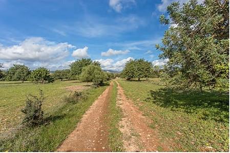 Plot of land for sale, Consell, Central Mallorca, Mallorca