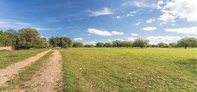 Image 3 | Plot of land for sale with 3.7 hectares of land, Consell, Central Mallorca, Mallorca 186375