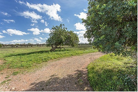 Image 4 | Plot of land for sale with 3.7 hectares of land, Consell, Central Mallorca, Mallorca 186375