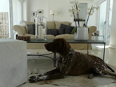 Image 21   4 bedroom villa for sale with 854m2 of land, La Cala Golf, Mijas, Malaga Costa del Sol, Andalucia 186853