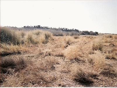 Plot of land for sale, Livadia, Larnaca
