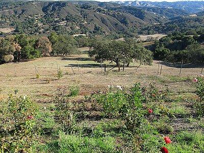 Image 18   Beautiful Vineyard Estate in California set in 1,000 Acres in the Carmel Valley 187502