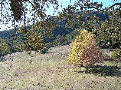 Image 20   Beautiful Vineyard Estate in California set in 1,000 Acres in the Carmel Valley 187502
