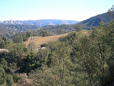 Image 23   Beautiful Vineyard Estate in California set in 1,000 Acres in the Carmel Valley 187502