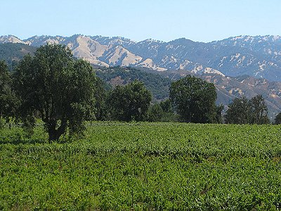Image 26   Beautiful Vineyard Estate in California set in 1,000 Acres in the Carmel Valley 187502