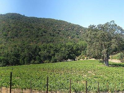 Image 4   Beautiful Vineyard Estate in California set in 1,000 Acres in the Carmel Valley 187502