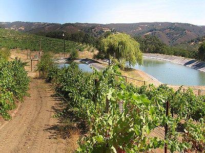 Image 5   Beautiful Vineyard Estate in California set in 1,000 Acres in the Carmel Valley 187502