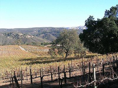 Image 7   Beautiful Vineyard Estate in California set in 1,000 Acres in the Carmel Valley 187502