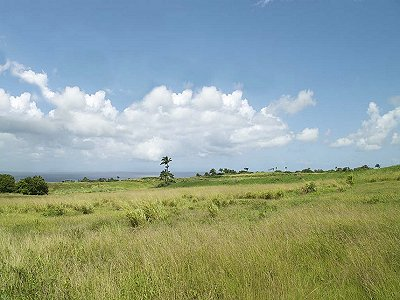 Image 5 | Plot of land for sale, St Peter, Saint Peter 193959