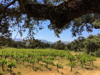 Vineyard with restaurant, event rooms and apartments and 100 hectares of land in Cadiz area