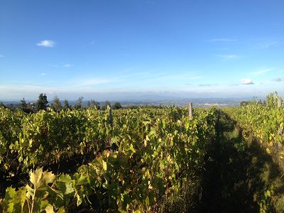 Tuscan Wine Estate for sale with Agriturismo and Pool and 29 hectares of land