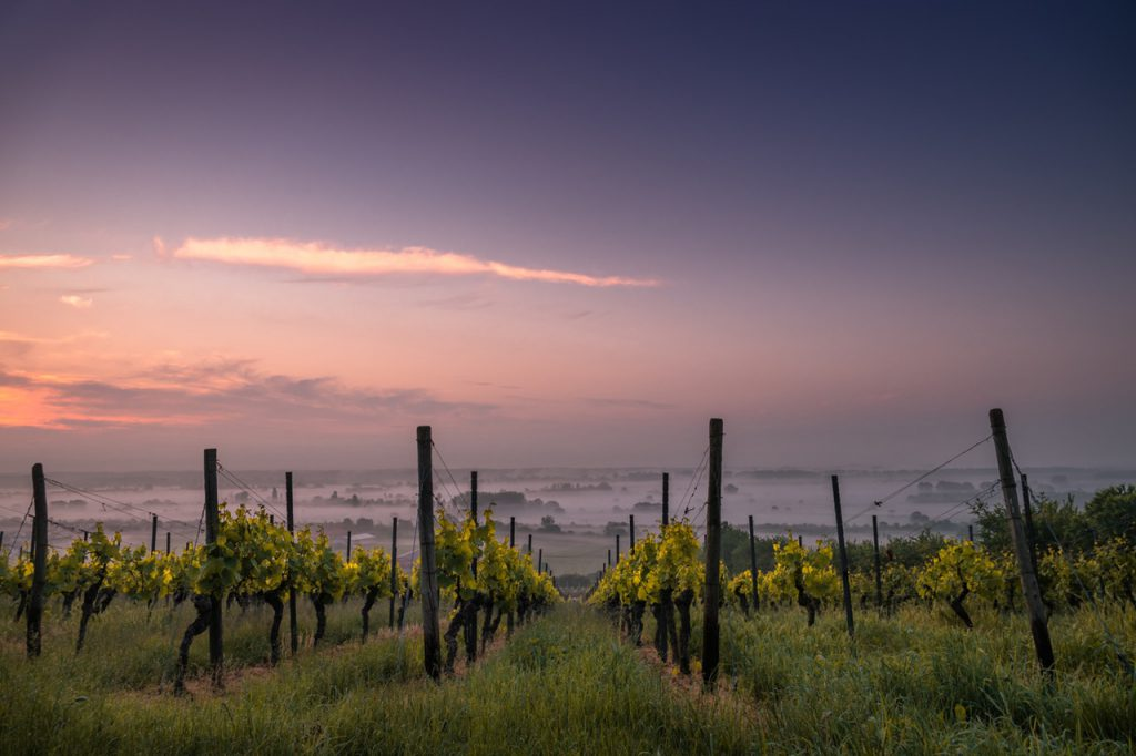 sunset over Italian vineyard near property for sale in Italy.