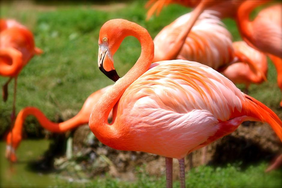 Flamingos at Ria Formosa Natural Park