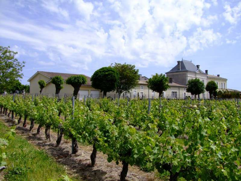 Small Chateau with Outstanding Vineyard in Cotes de Blaye, Bordeaux with 100 acres