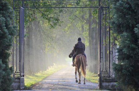 Everything You Need To Know About Equestrian Property In France